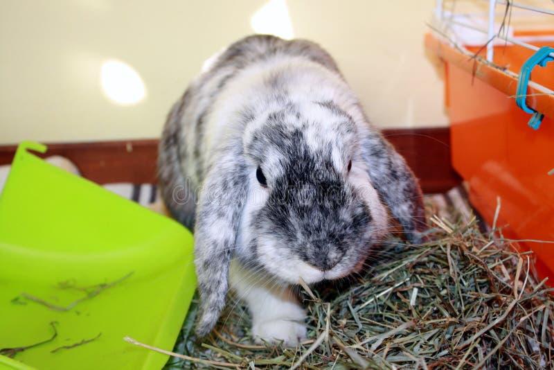 Angry Rabbit royalty free stock photos