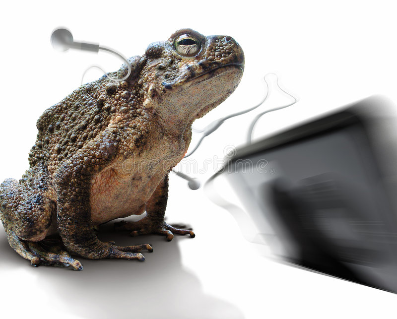 Angry Toad stock photos