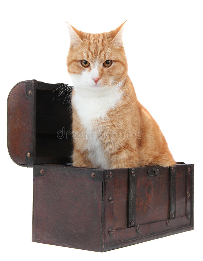 Download Angry Tomcat In Treasury Chest Stock Photo - Image: 22388900