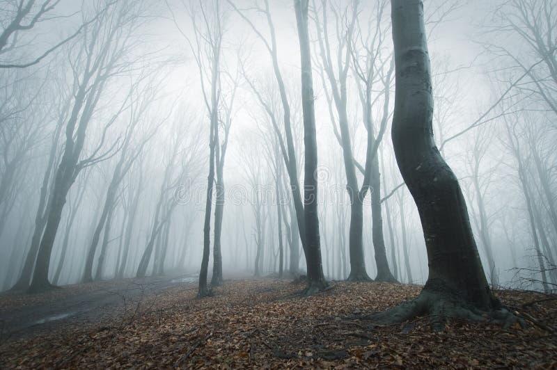 Angstaanjagende scène in een bos met mist stock foto's