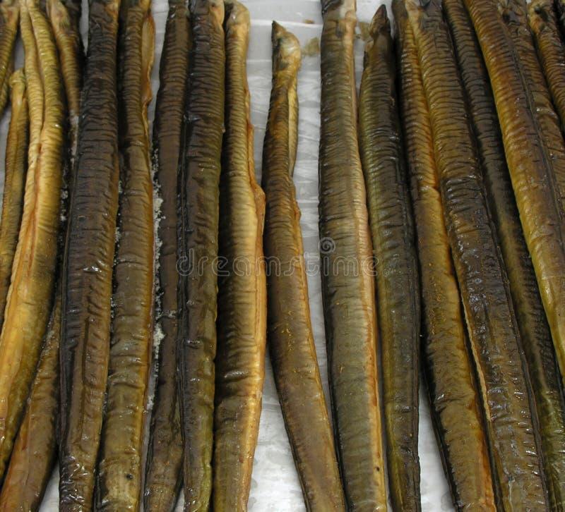 Anguila fotografía de archivo libre de regalías