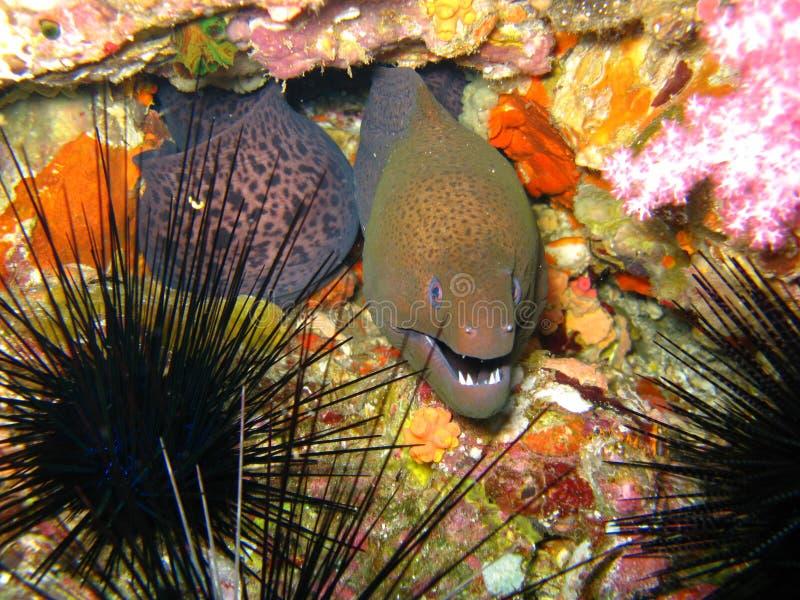 Anguila y anémona del mar foto de archivo