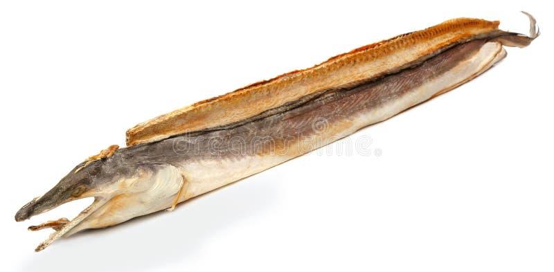Anguille de moray sèche image libre de droits