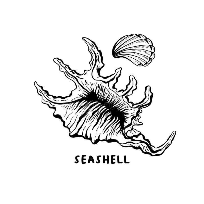 Angular murex conch hand drawn ink pen sketch. Angular murex seashell hand drawn illustration. Seashore conch, mollusk monochrome sketch. Freehand outline clam stock illustration