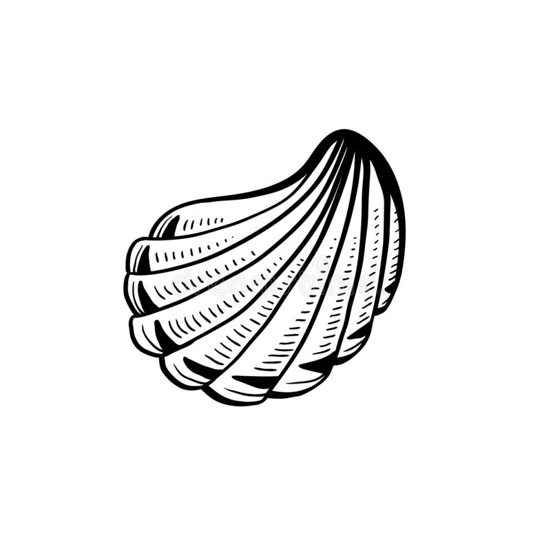 Angular murex conch hand drawn ink pen sketch. Angular murex seashell hand drawn illustration. Seashore conch, mollusk monochrome sketch. Freehand outline clam royalty free illustration