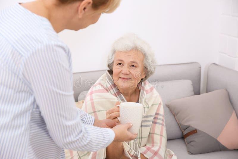 Anhörigvårdare som ger kopp te till den höga kvinnan arkivfoton