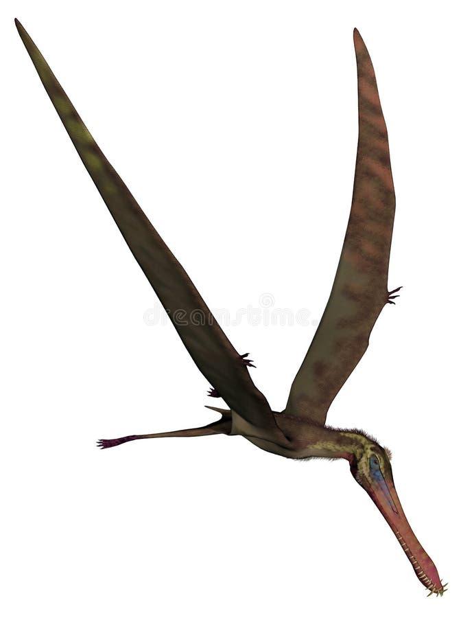 Anhanguera prehistoryczny ptak - 3D odpłacają się ilustracji