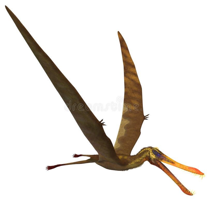 Anhanguera Pterosaur ilustração stock