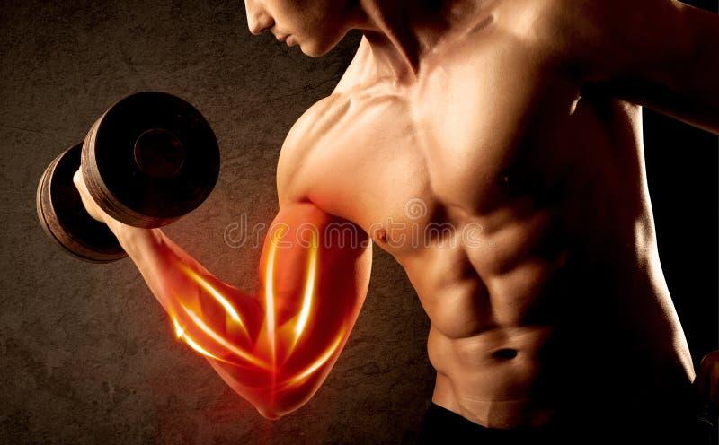 Anhebendes Gewicht des geeigneten Bodybuilders mit rotem Muskelkonzept stockfoto