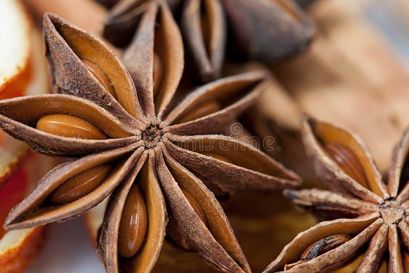 Anijsplantster royalty-vrije stock afbeeldingen