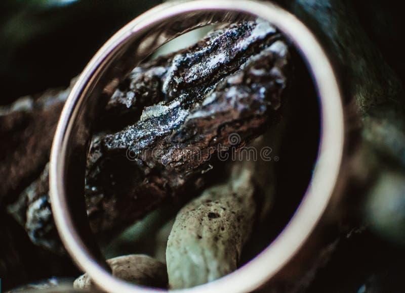 anillo foto de archivo
