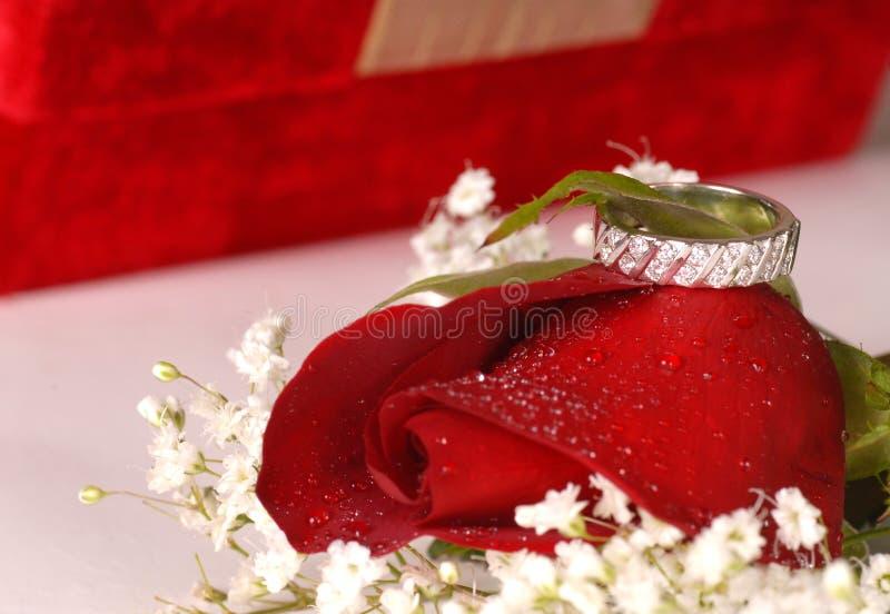 Anillo de compromiso en una rosa fotos de archivo