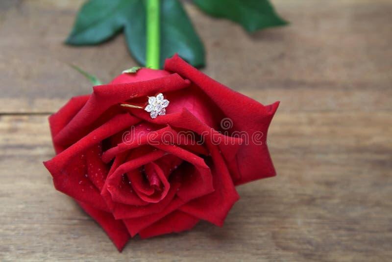 Anillo de diamante ocultado en pétalos color de rosa rojos imagen de archivo