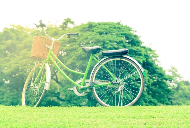 Anillo de la bicicleta del vintage con el árbol imágenes de archivo libres de regalías
