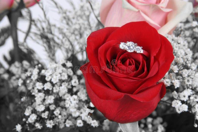 Anillo en Rose roja imagen de archivo libre de regalías