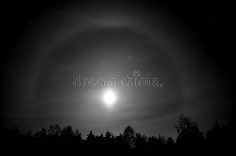 Anillo redondo hermoso alrededor de una Luna Llena detrás del bosque spruce oscuro del árbol en la noche fotos de archivo libres de regalías