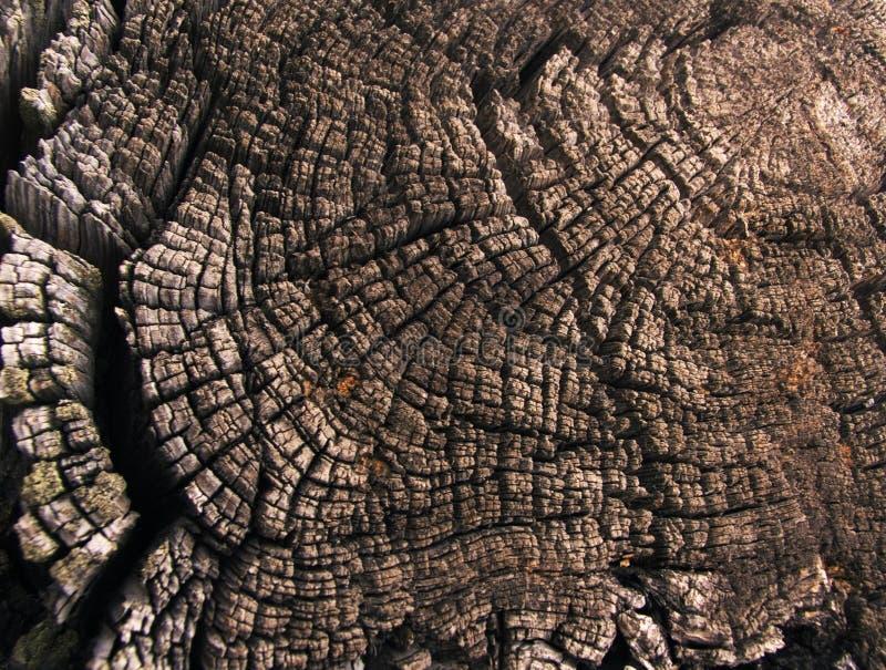 Anillos anuales de un árbol viejo fotografía de archivo