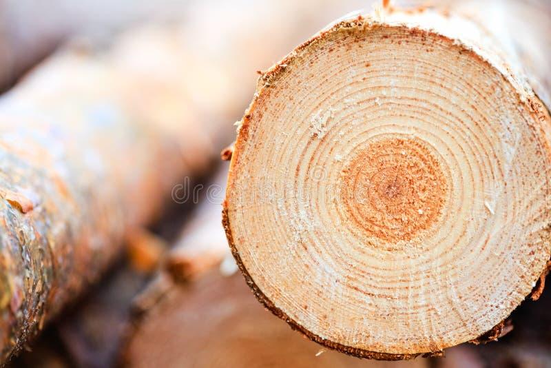 Anillos anuales en la madera aserrada de la madera del árbol de pino fotos de archivo