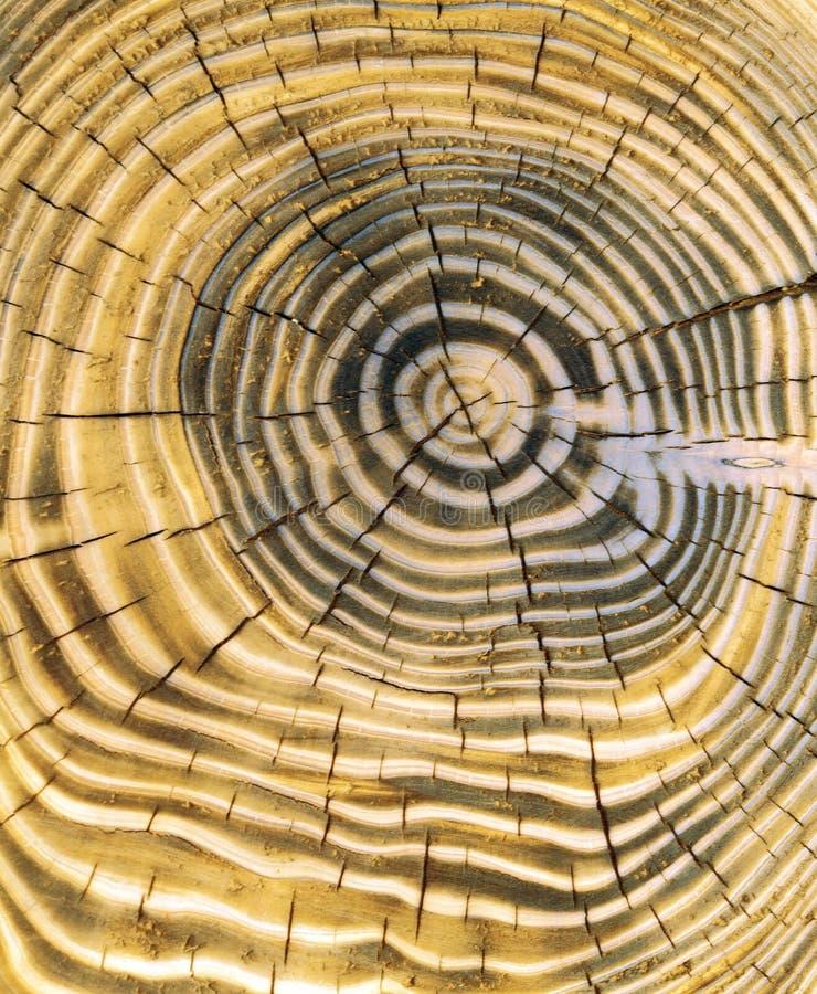 Anillos de árbol imagen de archivo libre de regalías