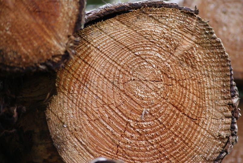 Anillos de árbol en un registro fotografía de archivo libre de regalías