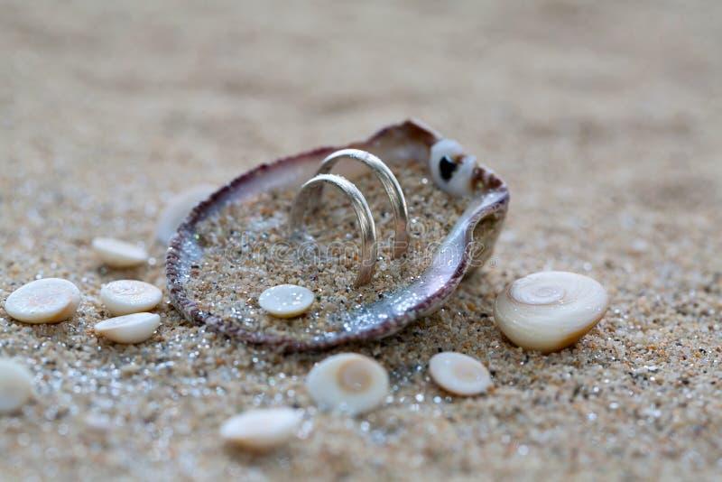 Anillos de bodas en cáscara del mar en la playa coralina fotografía de archivo libre de regalías