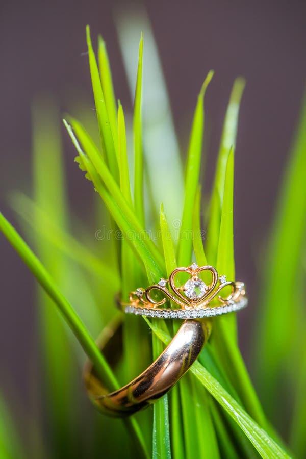 Anillos de bodas en hierba verde en estudio, luz del día fotografía de archivo libre de regalías