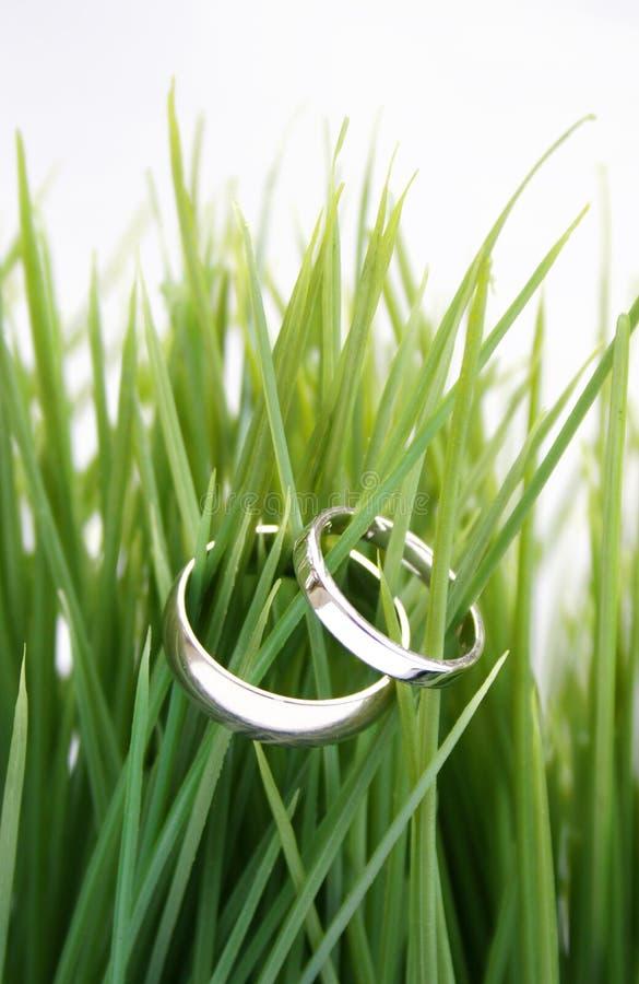 Anillos de bodas en la hierba fotos de archivo libres de regalías