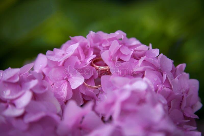 Anillos de bodas en las flores rosadas fotos de archivo