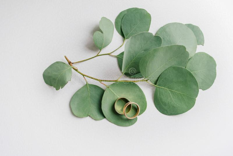 Anillos de bodas en las hojas del eucalipto fotos de archivo
