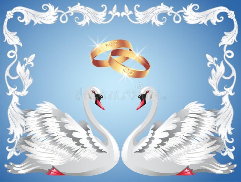 Anillos de bodas y dos cisnes ilustración del vector