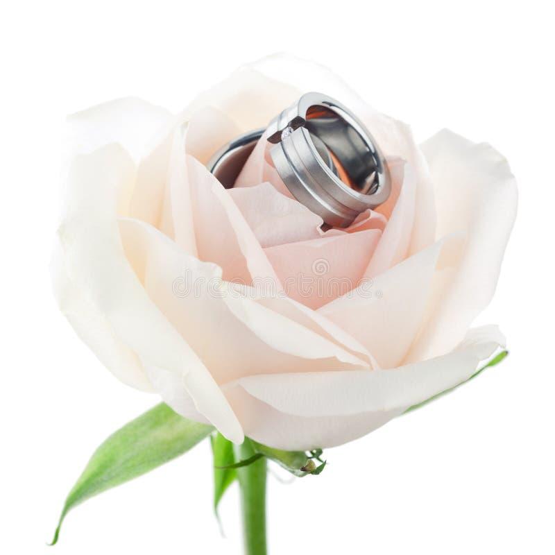Anillos de Weding en una rosa fotografía de archivo libre de regalías