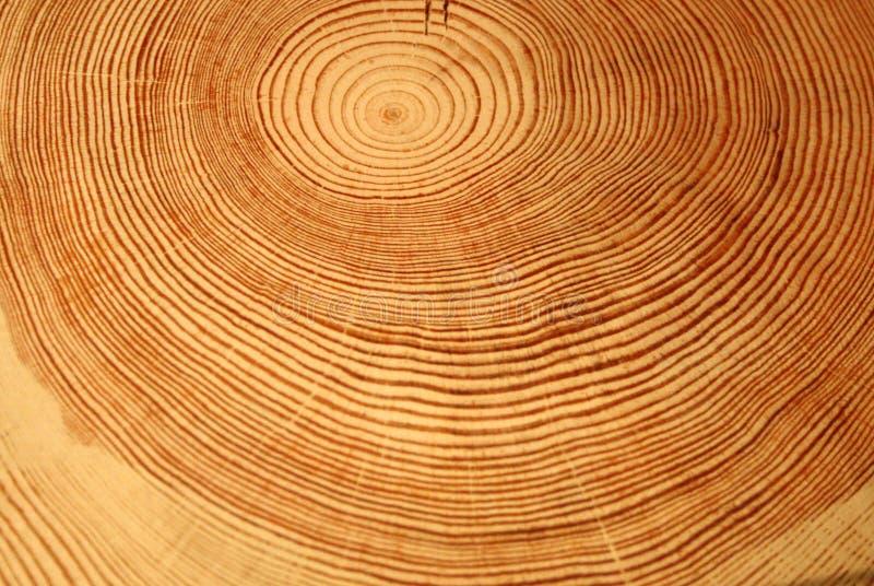 Anillos del año de un árbol imagenes de archivo
