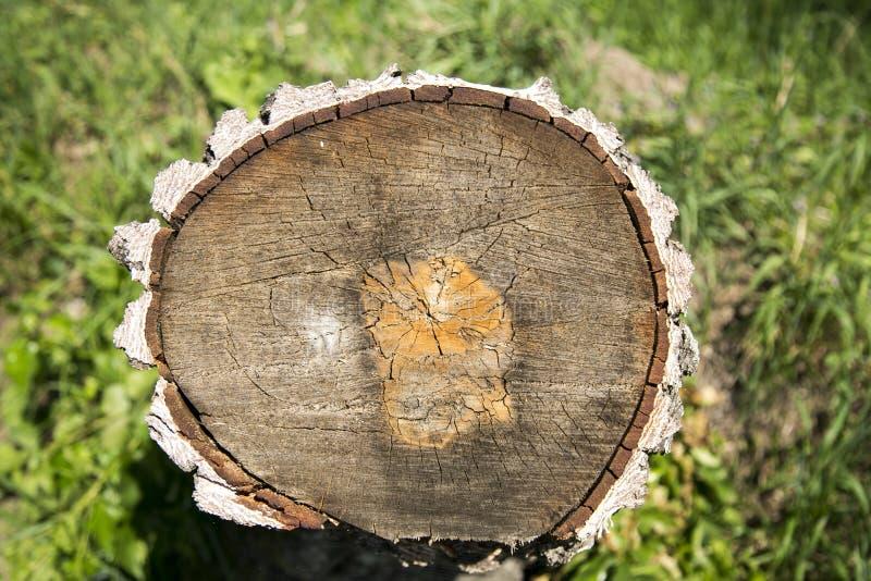 Anillos en el tronco de árbol foto de archivo libre de regalías