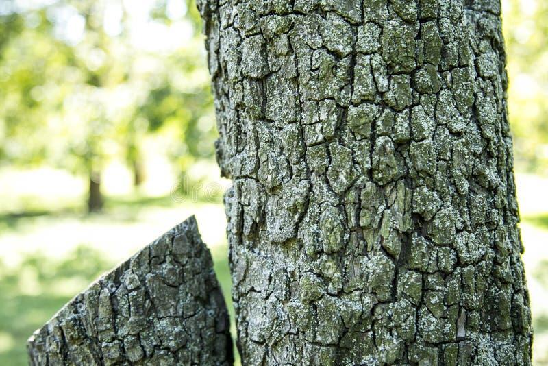 Anillos en el tronco de árbol foto de archivo