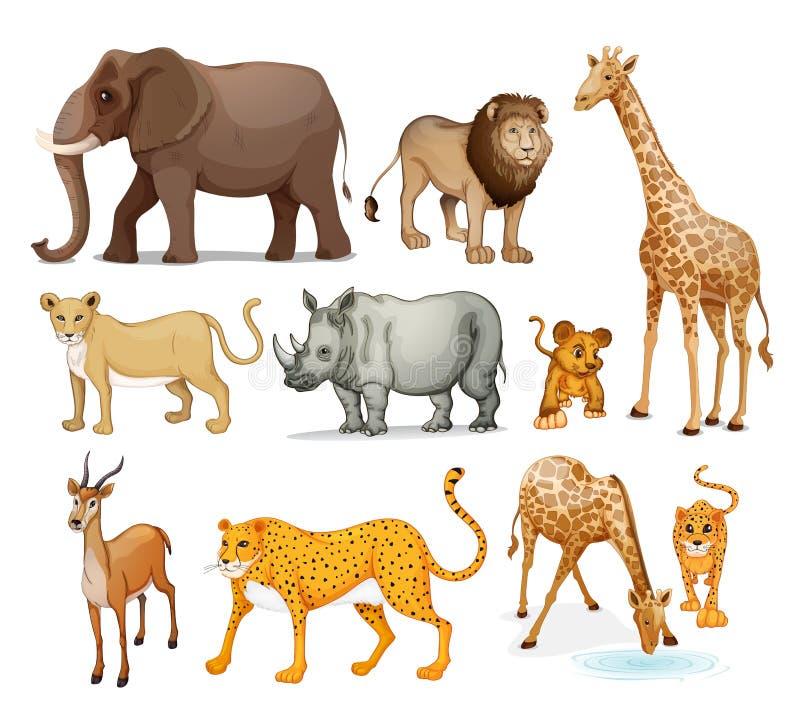 Animais ilustração royalty free