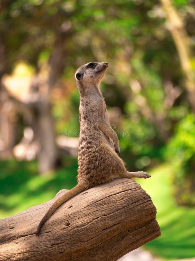 animais fotografia de stock royalty free