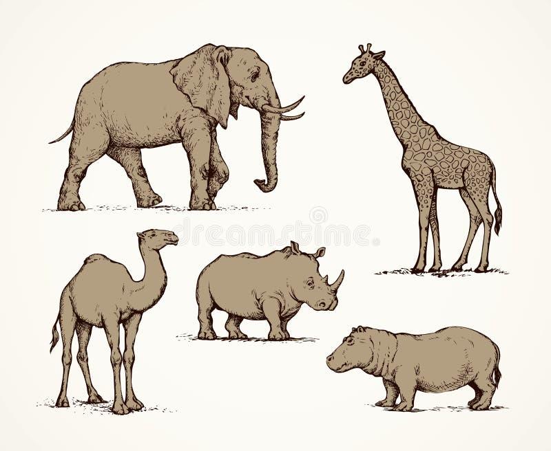 Animais africanos Desenho do vetor ilustração do vetor