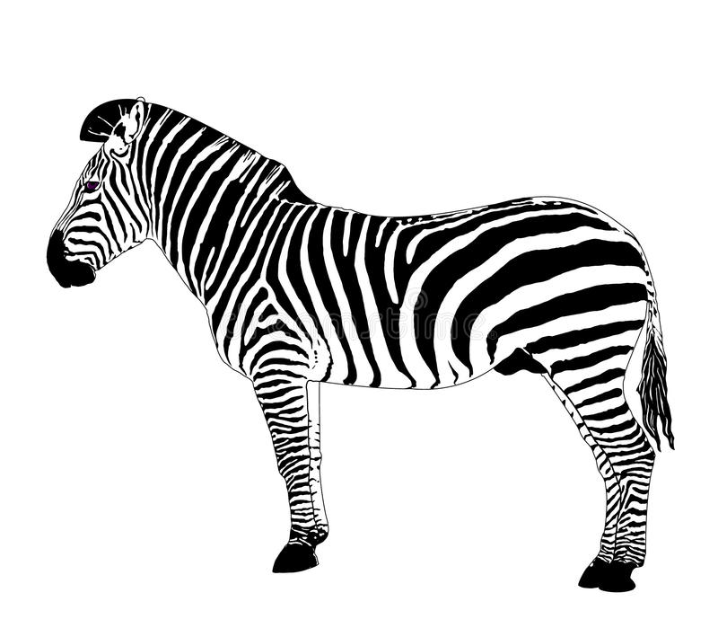 Animais Africanos: Zebra Do Vetor Imagem de Stock