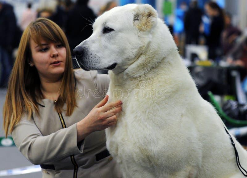 Animais bonitos na exposição de cães imagem de stock