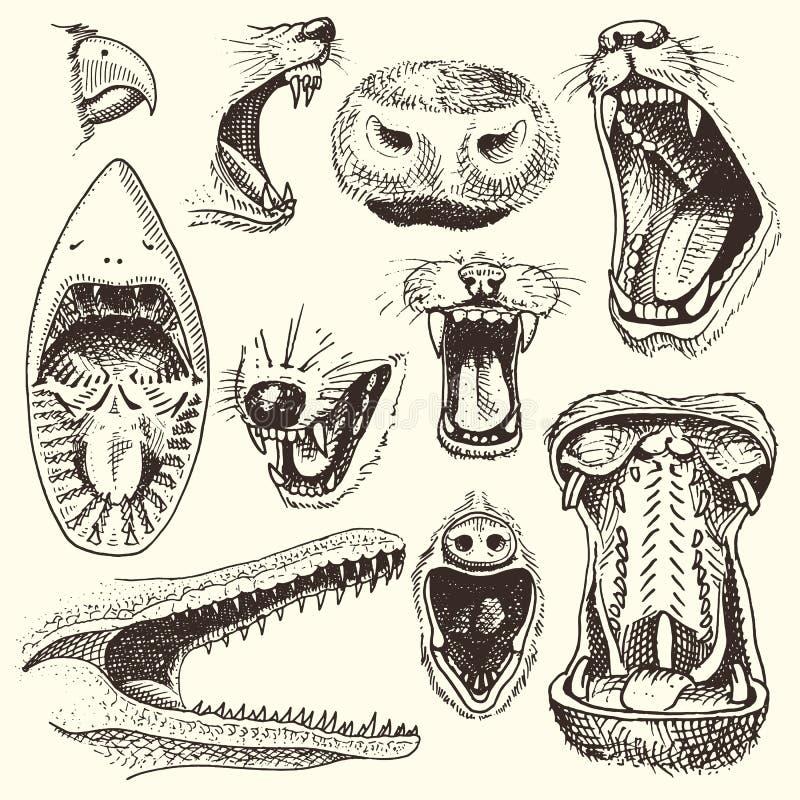 Animais com cabeças abertas do vetor da boca de animais leão ou crocodilo irritado e grupo agressivo rujir da ilustração do tubar ilustração do vetor