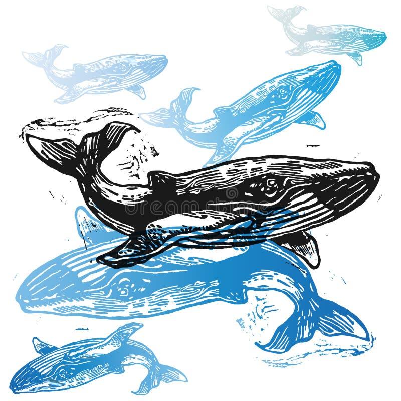Animais da baleia do vetor na composição abstrata ilustração do vetor
