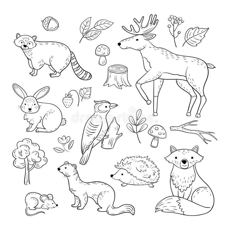 Animais da floresta do esboço As crianças animais da raposa da marta do ouriço do pica-pau da lebre dos alces do guaxinim do bebê ilustração stock