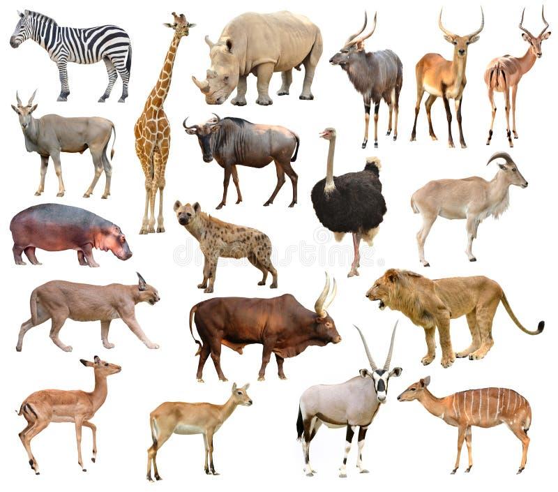Animais de África imagens de stock royalty free