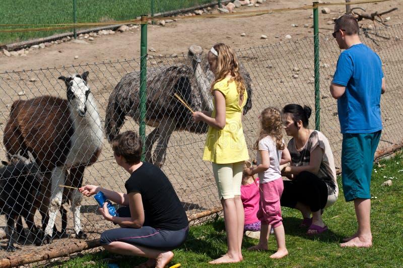 Animais de alimentação da família na exploração agrícola foto de stock