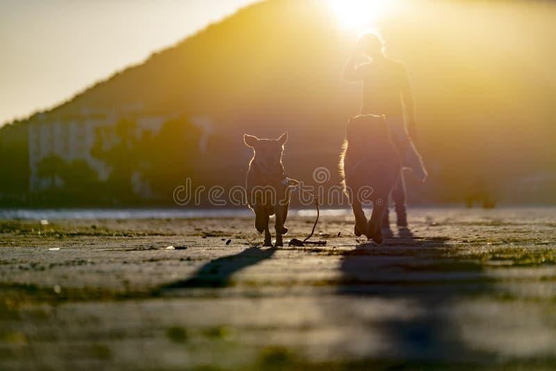 animais de animal de estimação, cães fotografia de stock