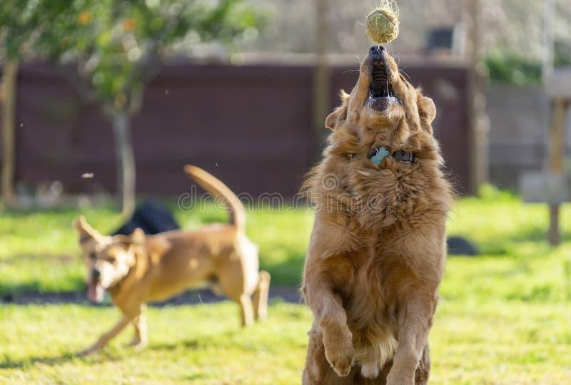 animais de animal de estimação, cães fotografia de stock royalty free