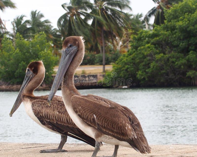Animais de Cuba fotografia de stock royalty free