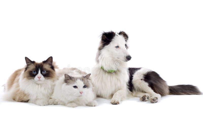 Animais de estimação fotografia de stock