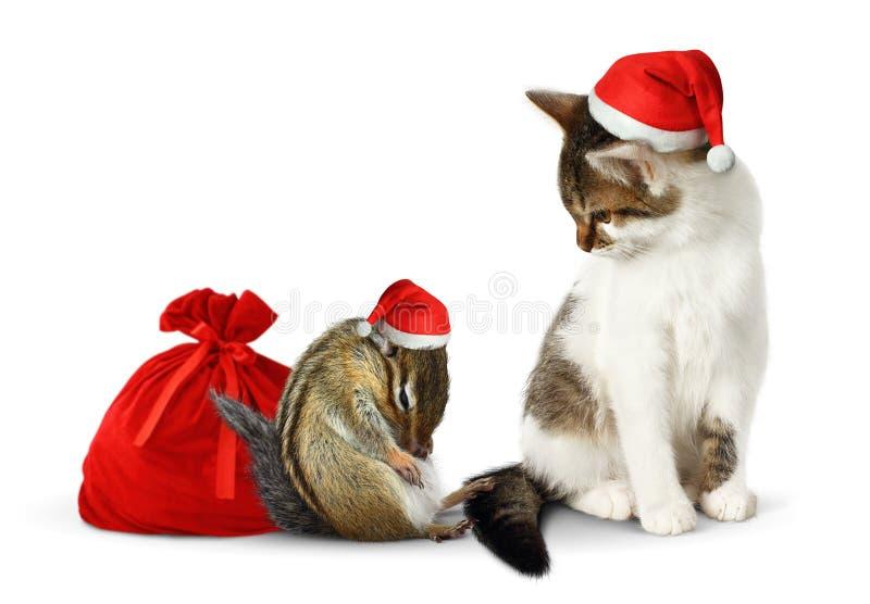 Animais de estimação cômicos do xmas, esquilo engraçado e gato com chapéu e saco de Santa fotografia de stock