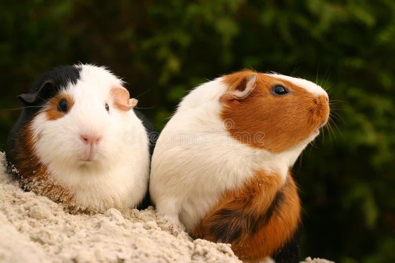 Animais de estimação curiosos imagem de stock
